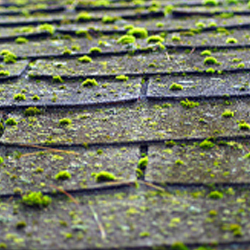 Warning Signs You May Need A New Roof Or Repairs Wilmington Nc Roofing And Siding Contractor